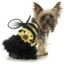 yorkie bee costume